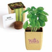 Flower Pot Set With Basil Seeds